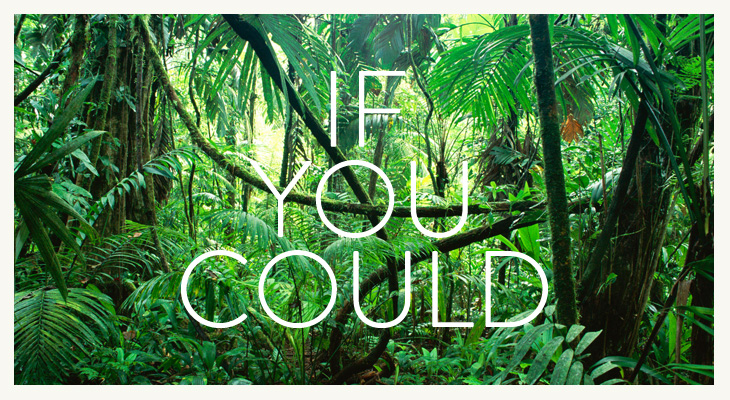 If You Could - Identity - In the jungle